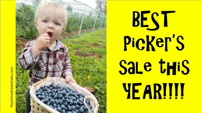 pickers blueberry
