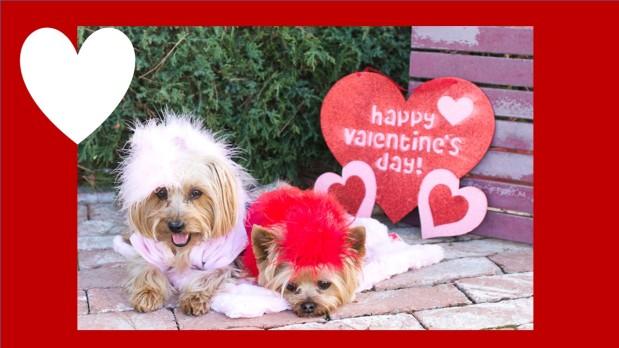 Happy Valentine's Day!! Woot!Woot!